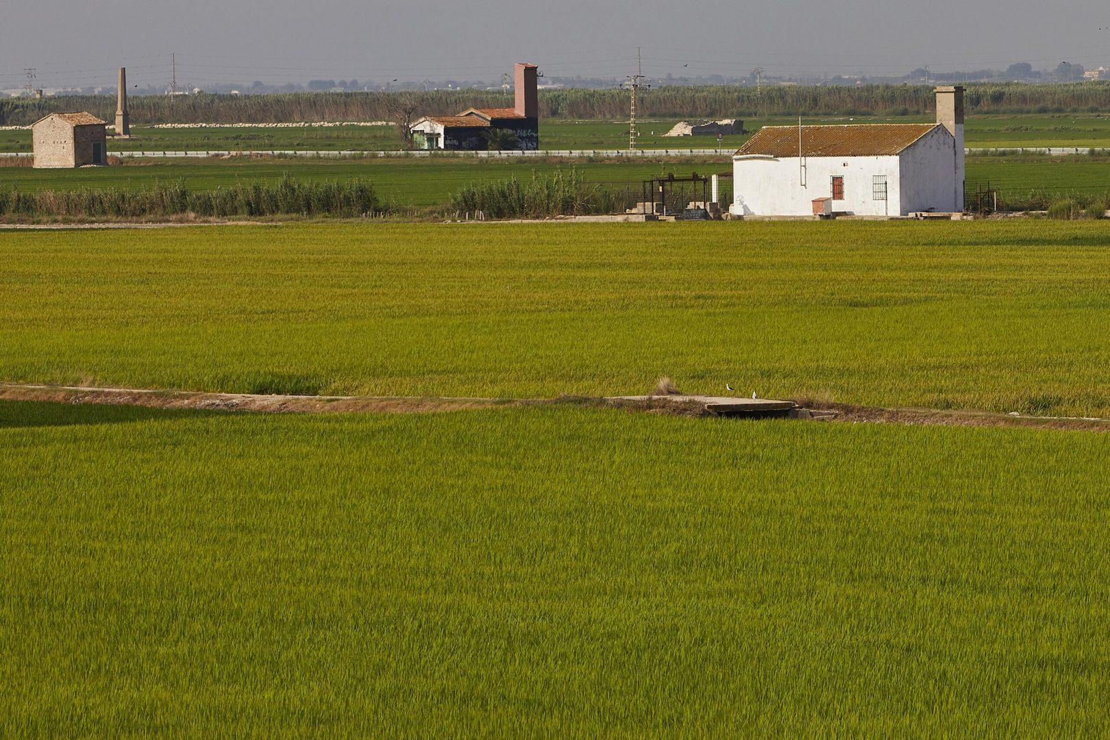 La huerta_Valencia_landbrug_studierejser_alfatravel