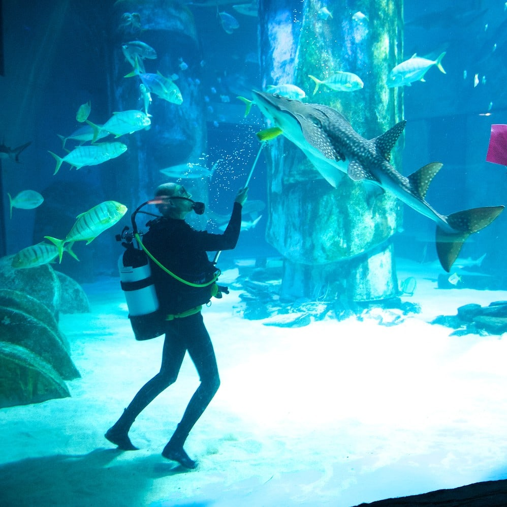 Studietur London Sealife Aquarium