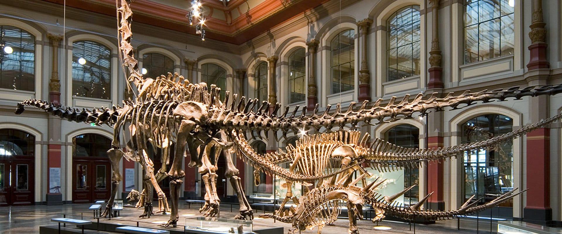 Studietur Berlin Museum fur Naturkunde