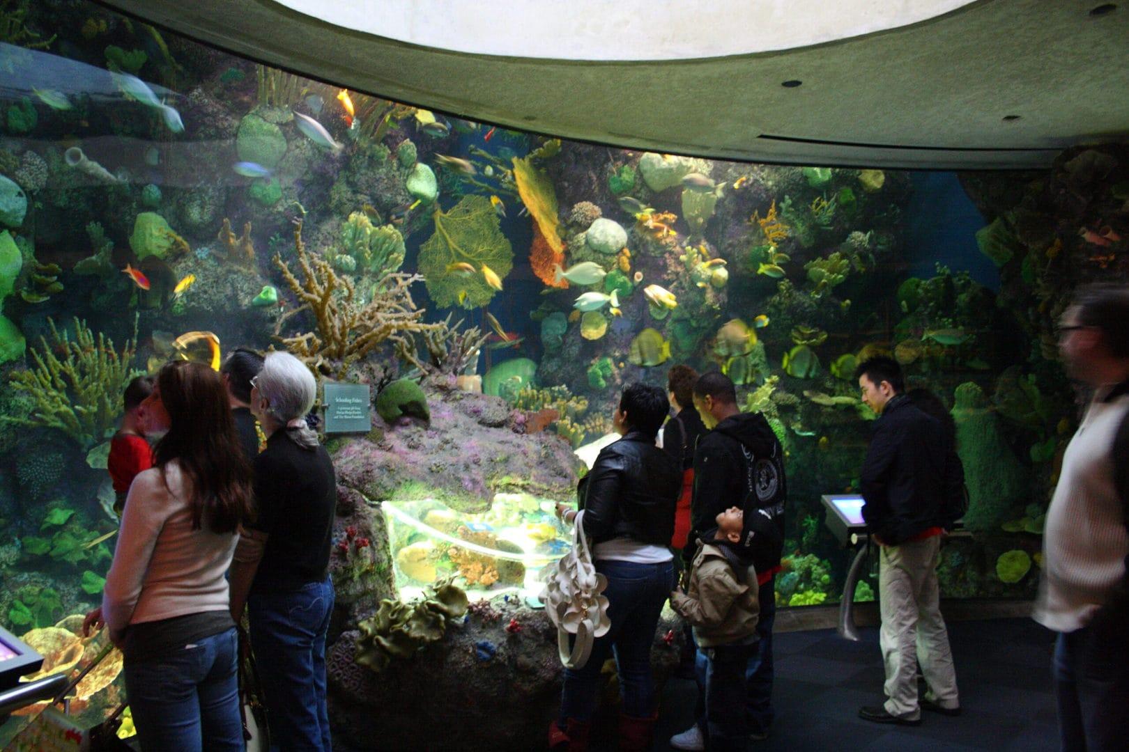Studietur Chicago Shedd Aquarium