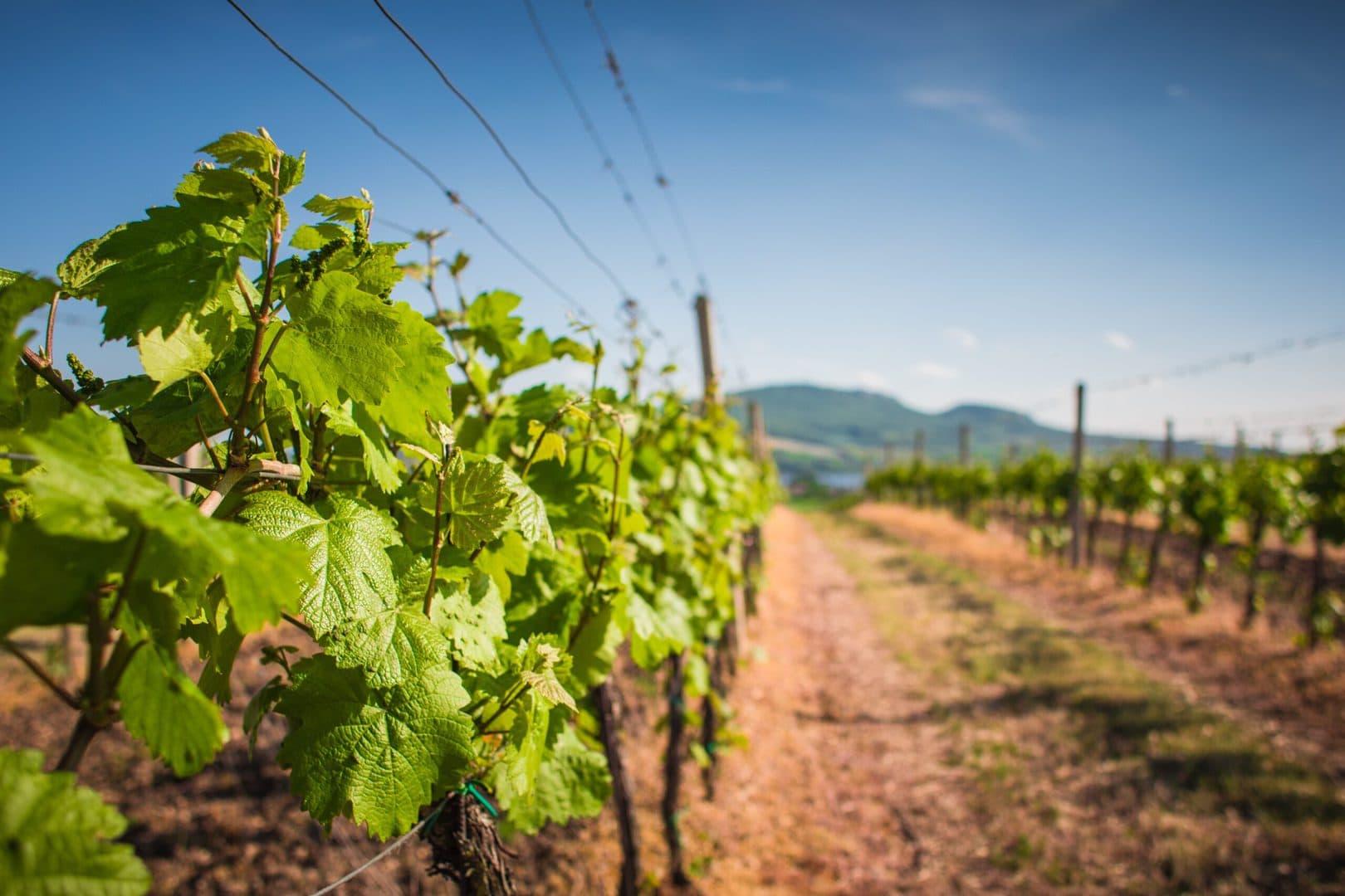 Studietur Strasbourg Klur vin