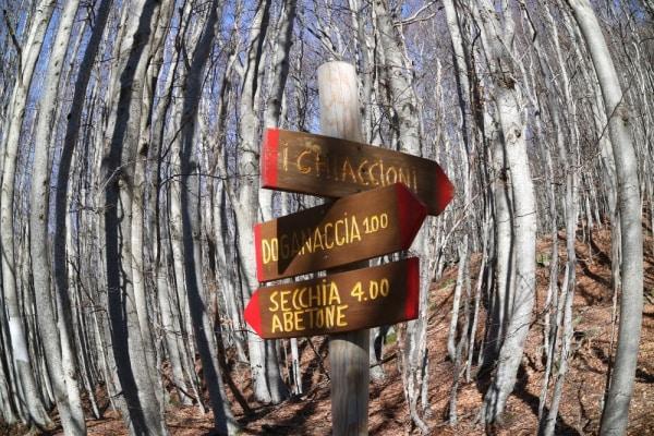 doganaccia_adventurePark_highrope_studierejser
