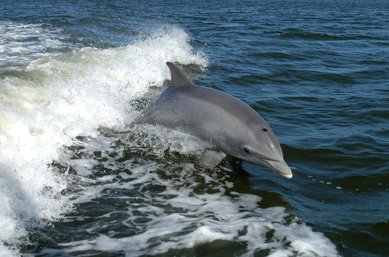 Studietur Lissabon Delfintur