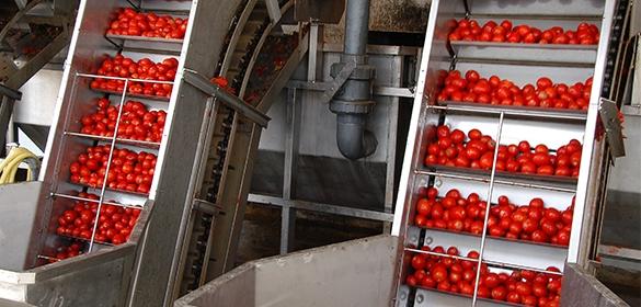 Landbrugsbesøg-Malta_magro-tomatproduktion