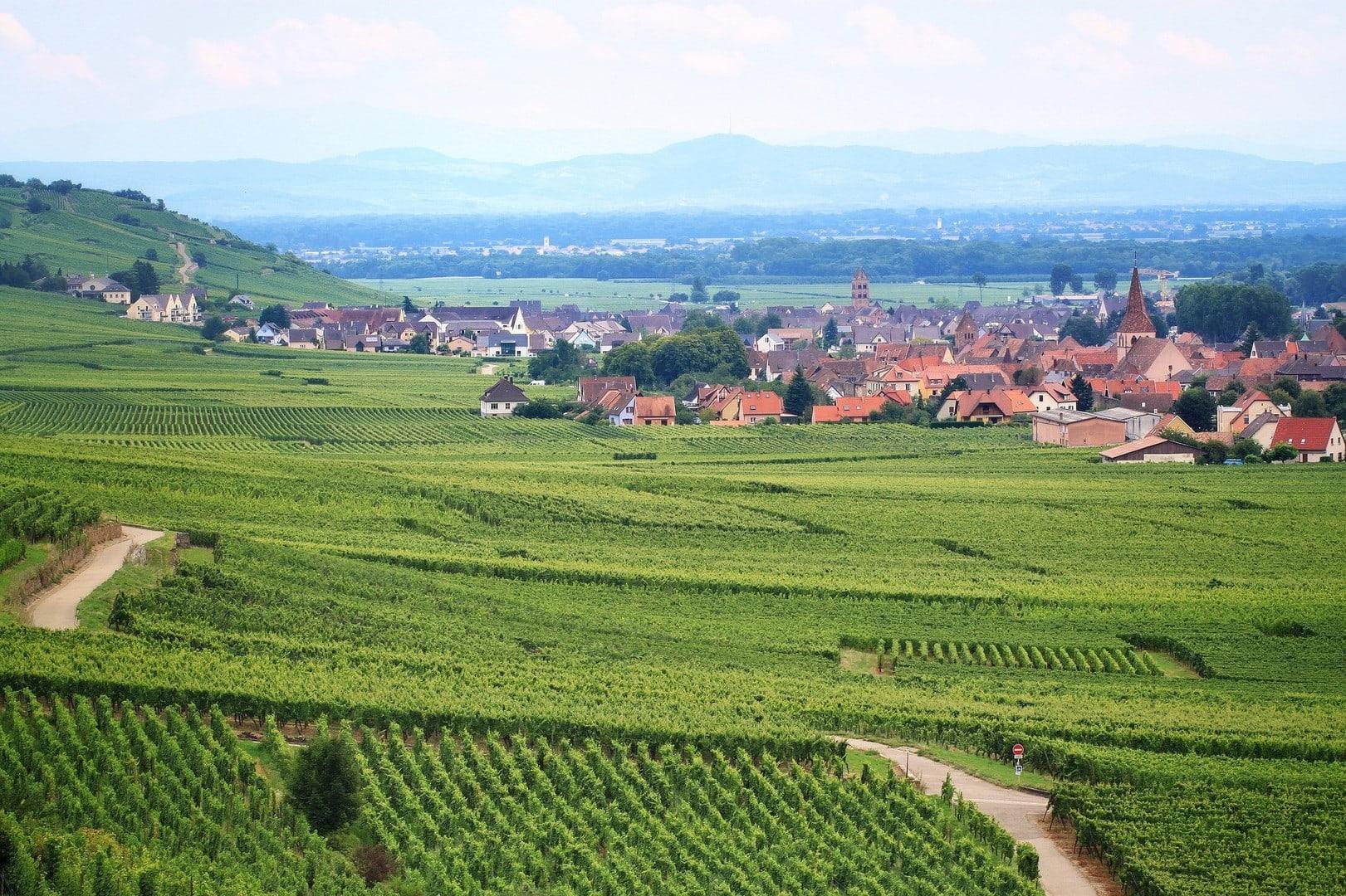 Studietur Strasbourg vingård