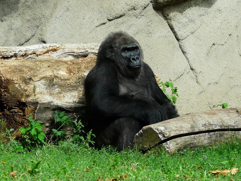 Zoo_budapest_studieprogram